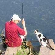 ネコと散歩 玉次郎 (カテゴリーが面白い)