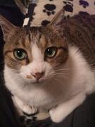 猫好き女のブログ