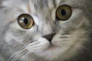 猫の目ニュース