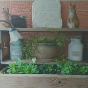 *my little garden*
