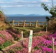 新潟の天気と佐渡島 風景写真/観光/おすすめ/朱鷺