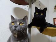 ティパとロイの猫日記