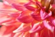 人生いろいろ 咲き乱れ
