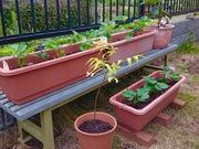 ゆっくり家庭菜園