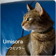 猫の首輪やグッズ (猫のお店) UMISORA TOPICS