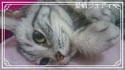 猫が好きのブログ