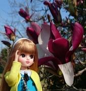 花言葉は『自然への愛』
