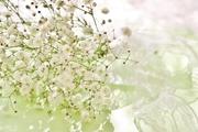 心にたくさんのカスミソウを咲かせよう