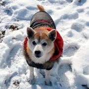 海旅!山旅!犬旅!