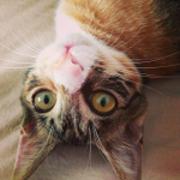 cat & cat & etc.
