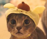 猫のりゅおんとれのん