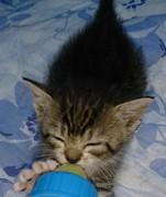 「天使の翼」保護猫達と避妊去勢の活動等