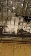 loprabbitのブログ