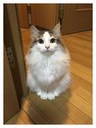 我が家に猫がやってきた