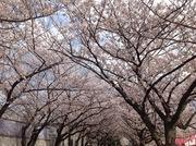 桜と海とお日さま