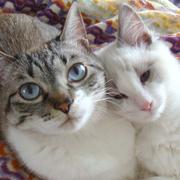 猫好きオタクの平凡な日常