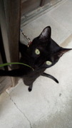 猫夜叉。さんのプロフィール