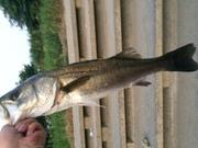 二児の父親の魚が釣りたい!