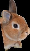 ウサギのココア