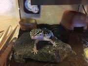リケジョ、爬虫類を飼う