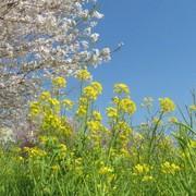自然菜園日記