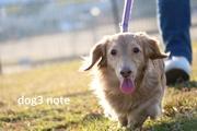 「愛犬ともっと幸せになれる」