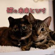猫の未来とびらさんのプロフィール