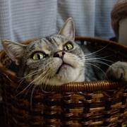 うずしま猫ハイテンション