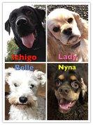 スピリチュアルアイテムショップ月の王国看板犬4姉妹