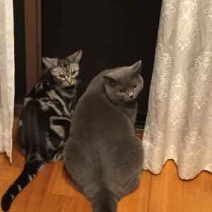 猫と暮らすきこりんハウス
