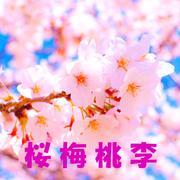 桜梅桃李さんのプロフィール