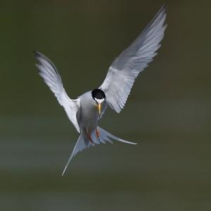 すぐ近くにある世界:野鳥,昆虫,航空機など...