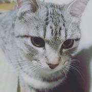猫とガーデニングに癒される日々