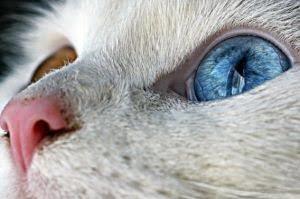 猫薬プロジェクト3rd〜論文情報の活用〜