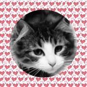 猫とタロット占いと