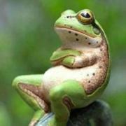 動物食事動画サイト