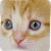 崖ップチのポヨヨンのブログ