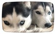 The Husky! Shelby&Mia