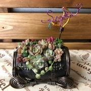 succulent base of drop