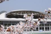 阪神競馬場×子育て