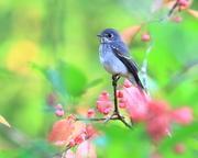 綺麗な野鳥たち