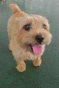 愛犬と海外を旅する期間限定のブログ