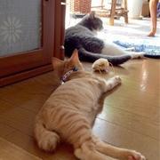 猫のおかげで笑顔になれる日常