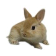 ウサギのお店 Petit lapin (プティラパン)のブログ
