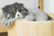 猫の肉球〜可愛い・癒し・笑い〜