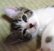 おすすめ読書ライフ〜猫と音楽を添えて〜
