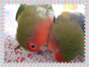 小鳥と私と毎日と