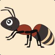 蟻を飼う〜ムネアカオオアリ飼育ブログ