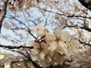 初めてのマタニティ☆目指せ節約&おしゃれ生活