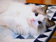 猫ちゃん達のほっこり日記 ルナ☆るり ごろりんぱ
